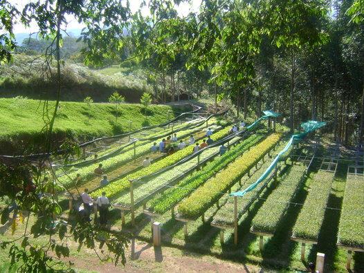 vivero-reforestacion-villa-rica-peru