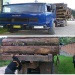 decomisan-madera-que-era-lleva-jpg_654x469